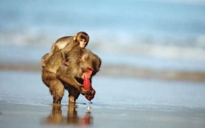 Stá opice a propojenost všeho