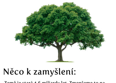 Zamyšlení o lesích
