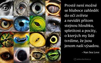 Oči zvířete