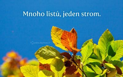 Mnoho listů …